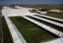 Walkway through crops at farm progress show